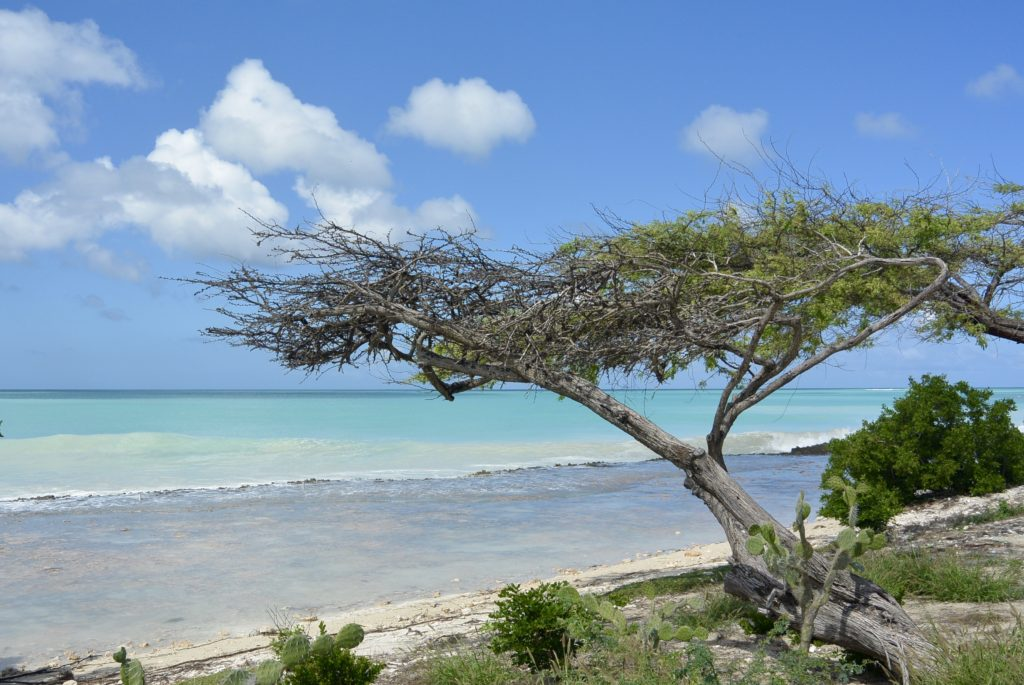 The Top Attractions in Aruba • Big Time Travels